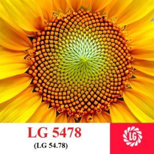 LG 5478